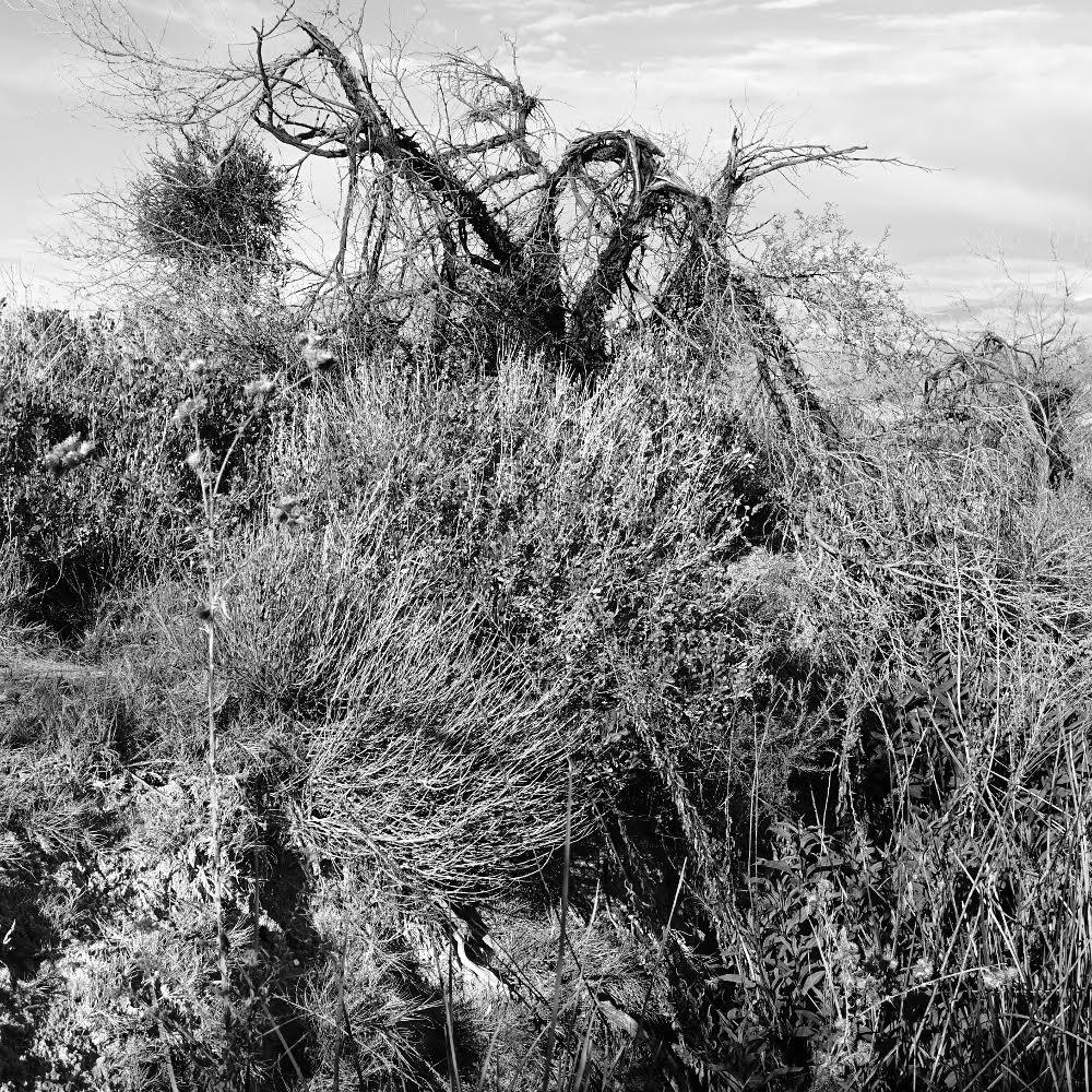 "Below Whitney Mesa, 2017 Black and white inkjet print, 10.5"" x 10.5"""