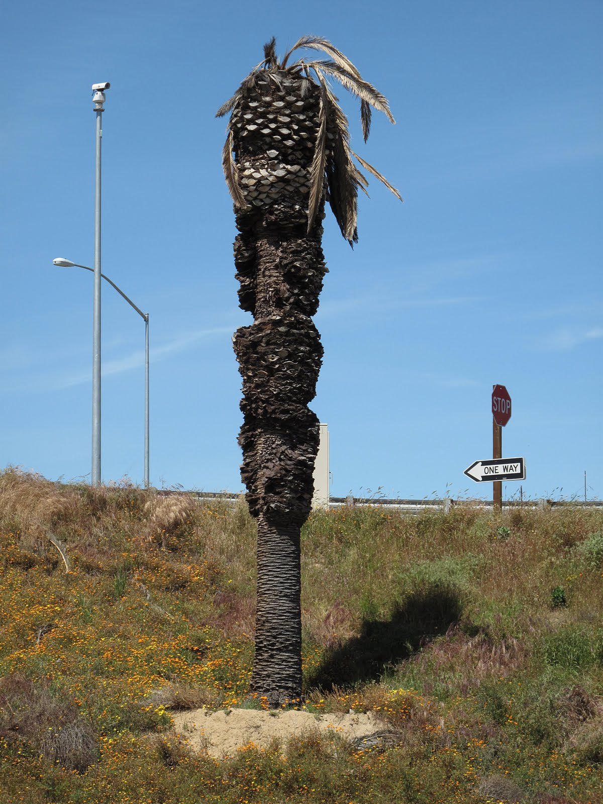 """Surveillance Tower and Palm Tree, Livingston CA, 2010 Color c-type photograph, 14"""" x 10"""""""