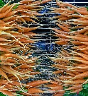 orange carrots.jpg