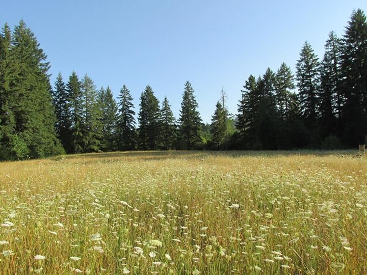 The meadow at Lost Valley.