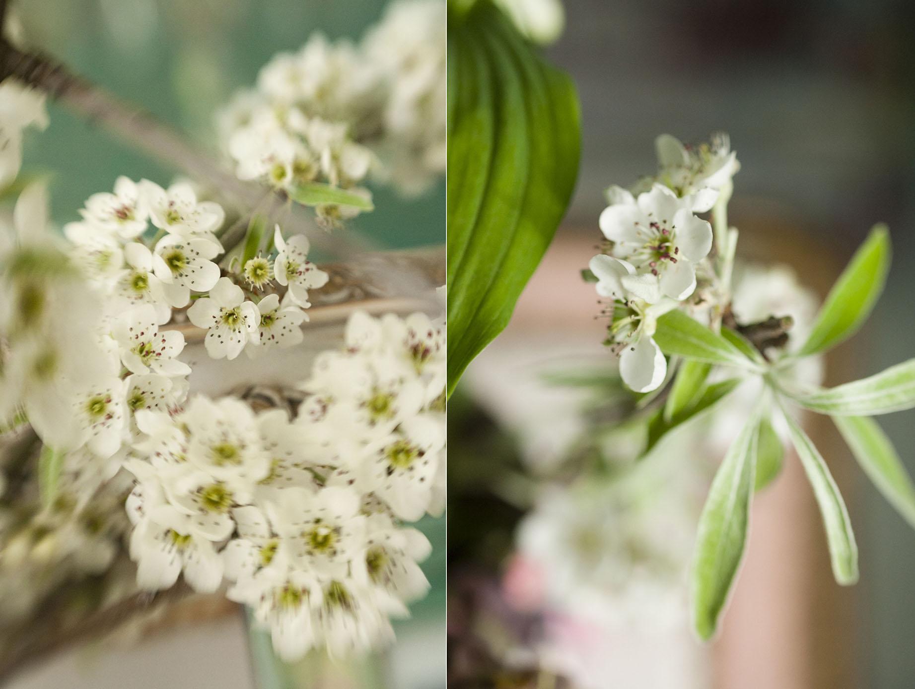 Flower_Book_Day2_070_pair.jpg
