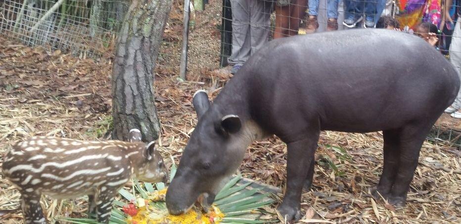 mom-and-sparky-tapir.jpg