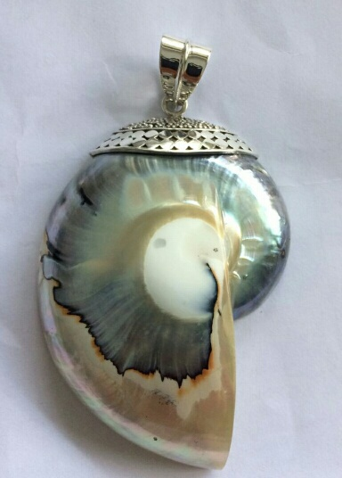 """Nautilus shell pendant  with decorative cap and bail  3"""" tall x 2"""" wide  $65"""