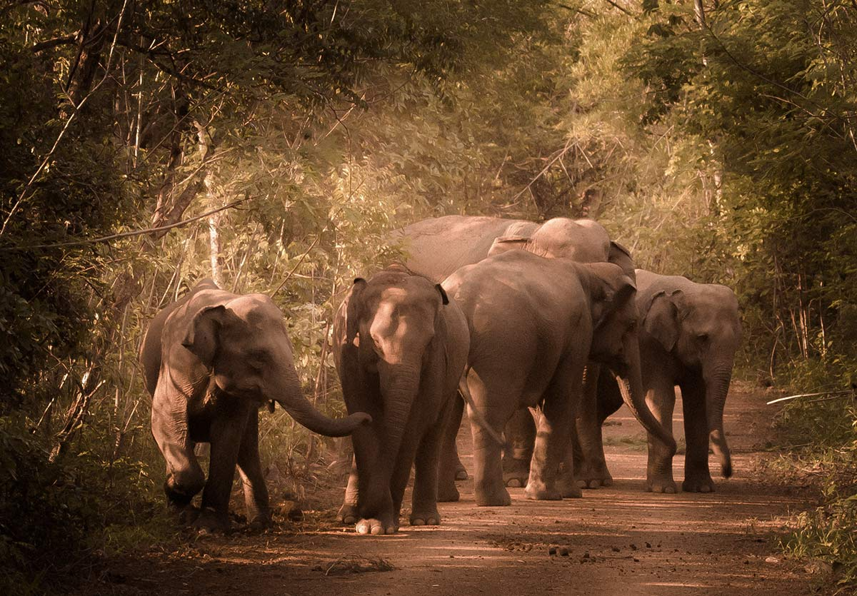 Elephants-Returned-to-the-Wild.jpg