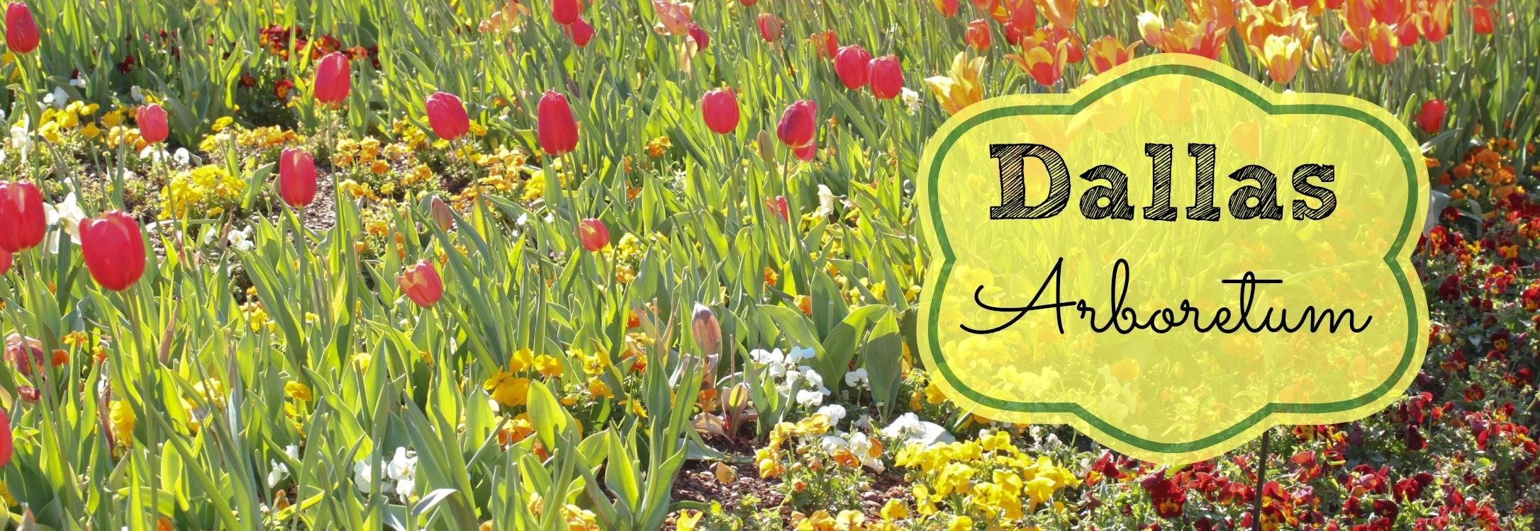 dallas-arboretum-tulips.jpg