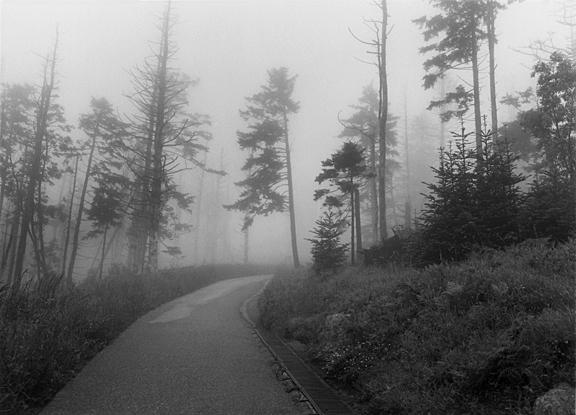 024 Journey InbalAbergil.jpg