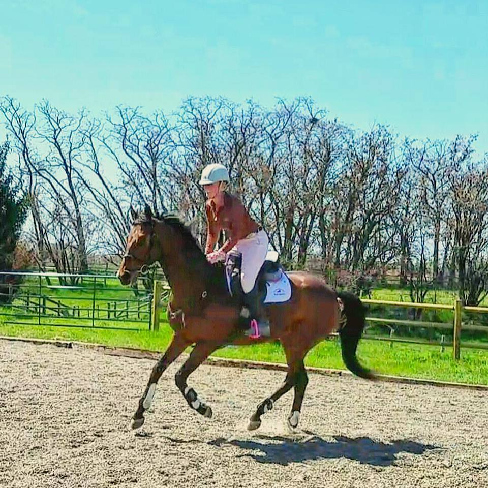 Can I just canter him all day?