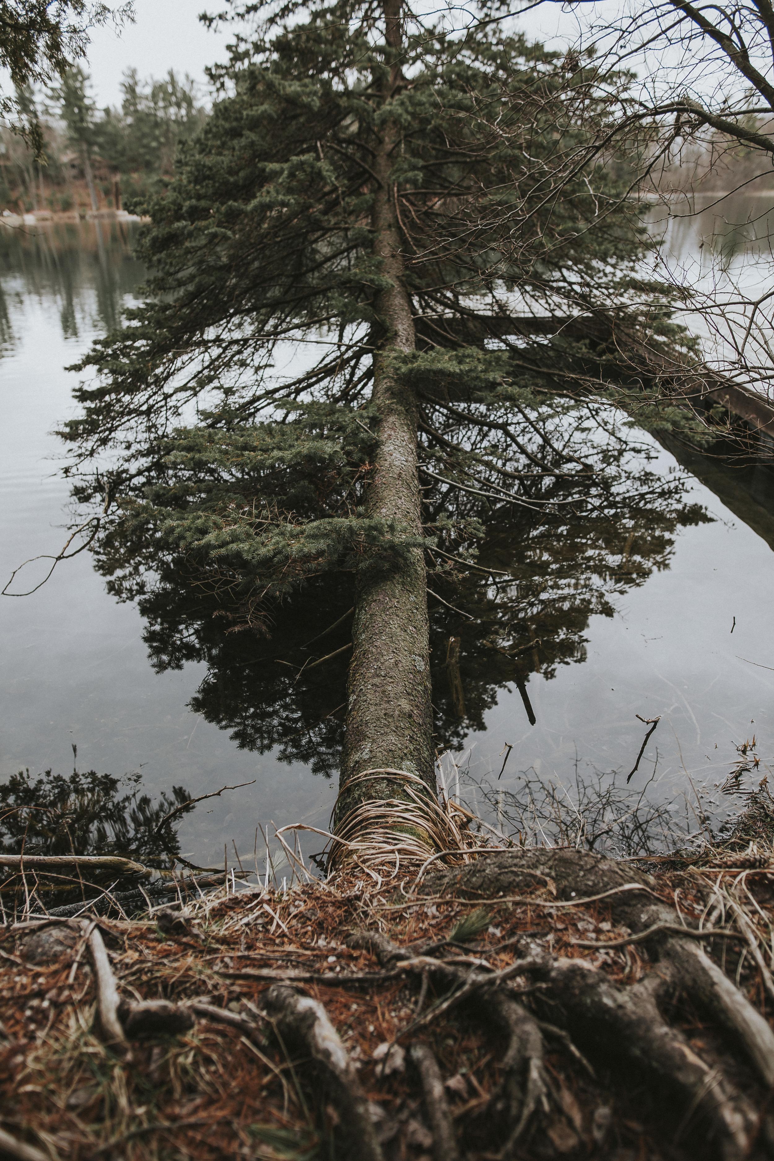 Whispering Pines 2.jpg