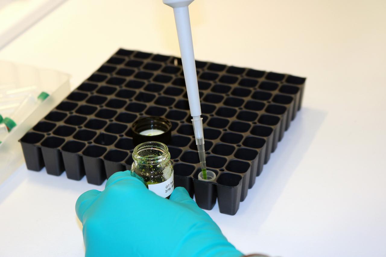 greenhouse-growing-system-industrial-hemp-potency-testing.jpeg