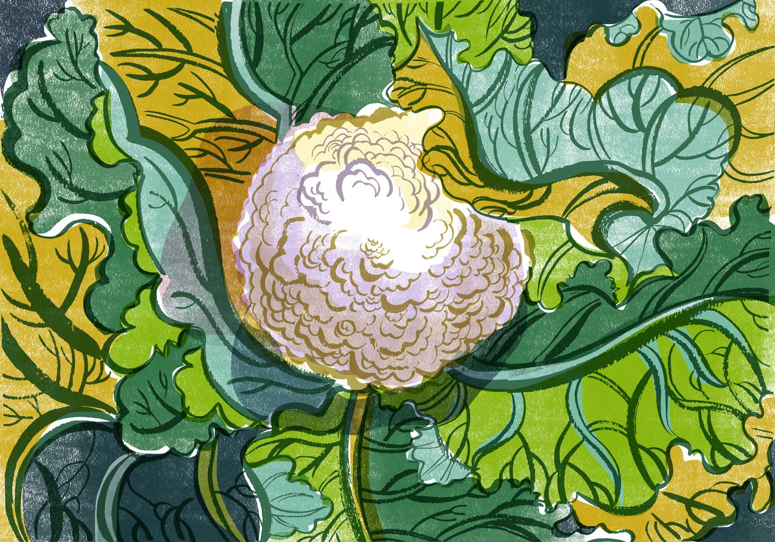 sarahtanatjones-cauliflower-web.jpg
