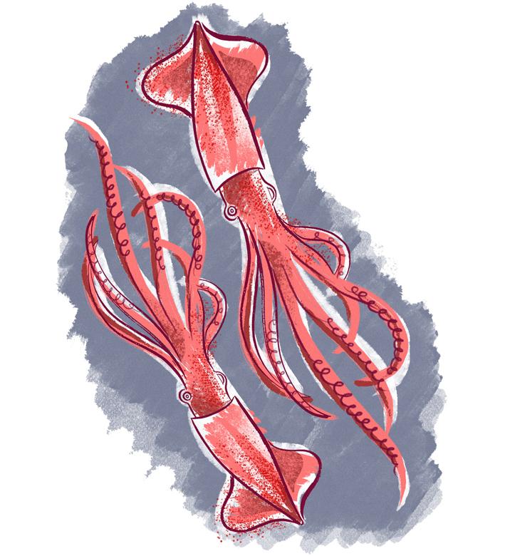 What-I-Ate-Squid-insta.jpg