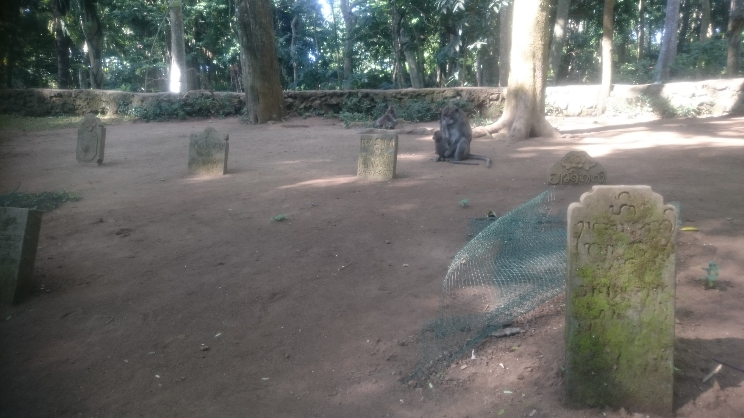 Under the Monkey Forest: some of the headstones with a mum and baby macaque.