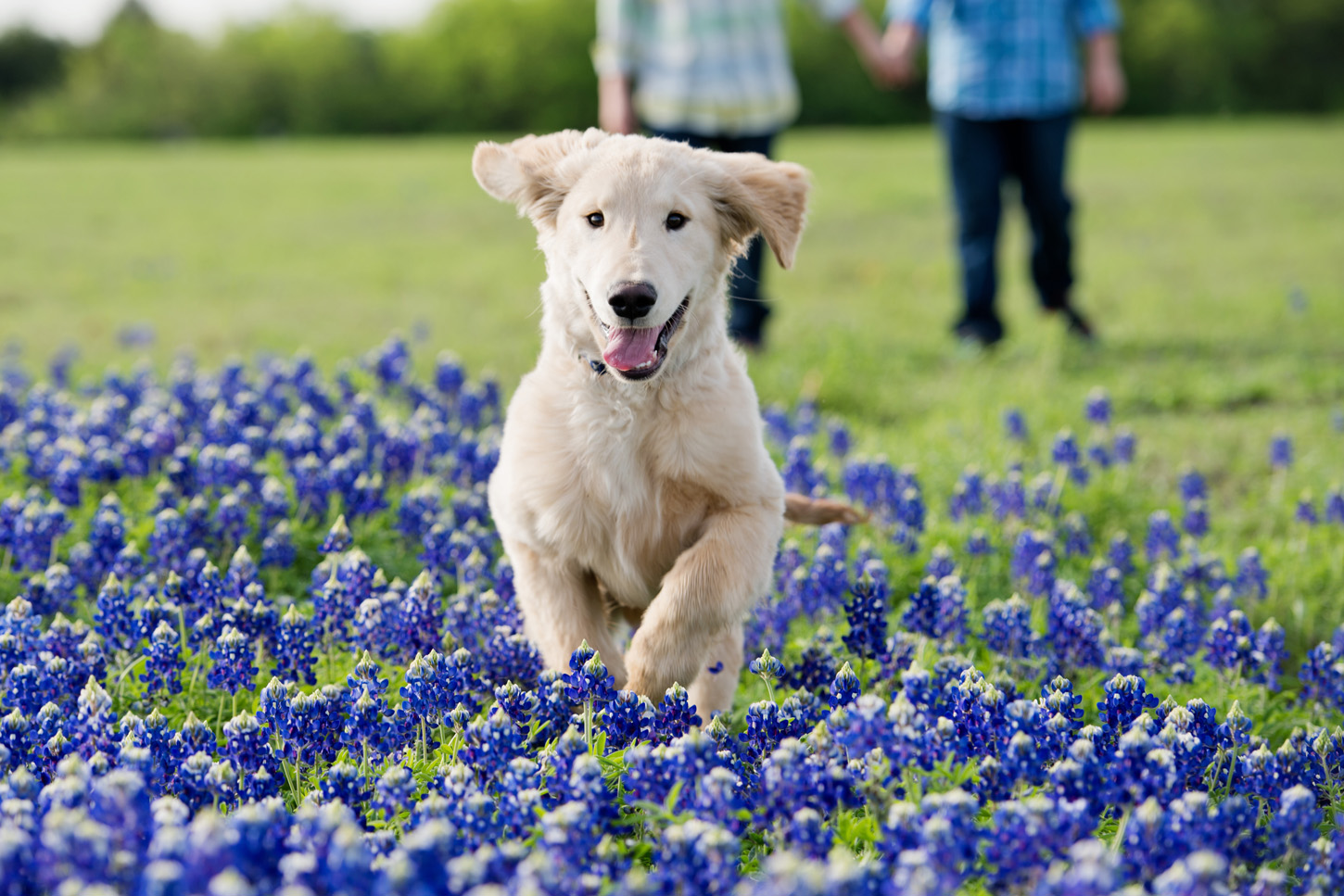 boys and their dogs in the bluebonnets