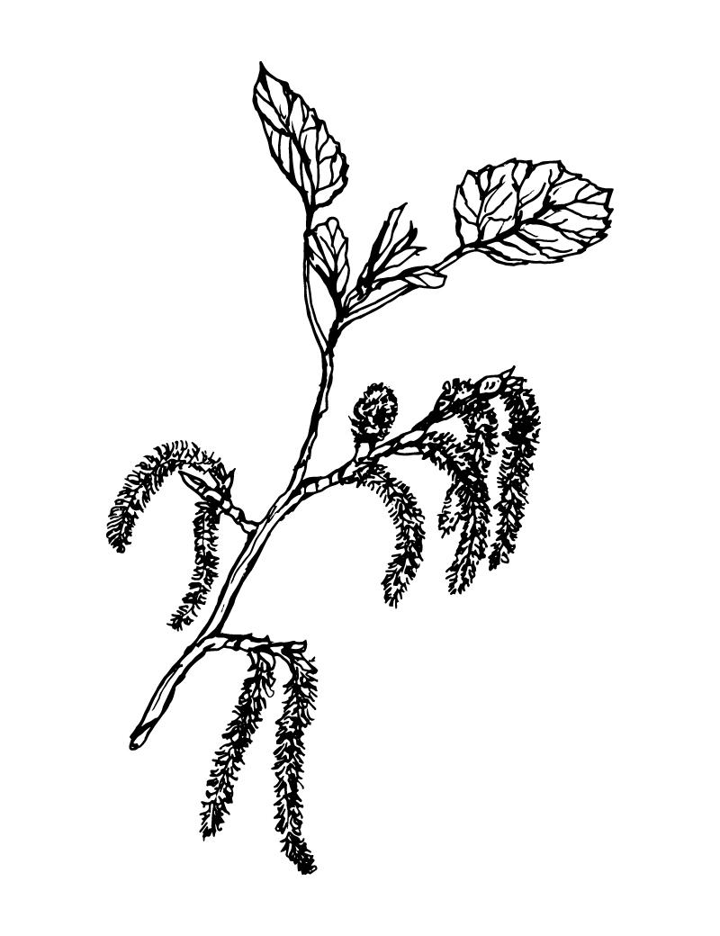 Wishcraft_Apothecary_Bach_Flower__Aspen.jpg