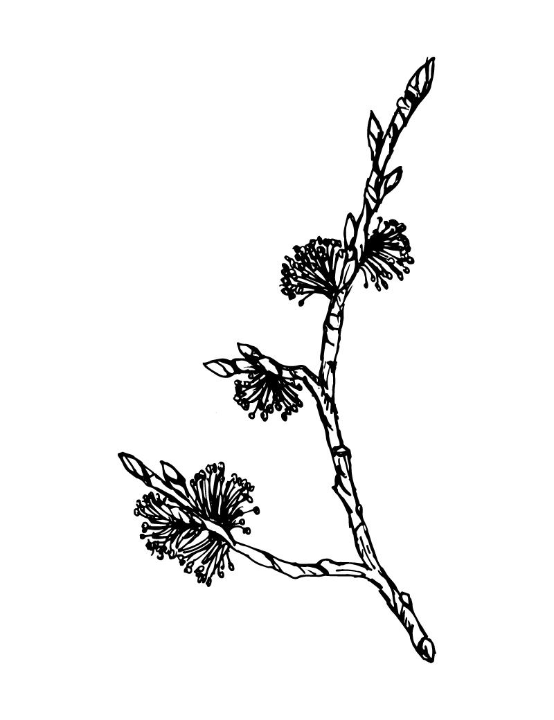 Wishcraft_Apothecary_Bach_Flower__Elm.jpg