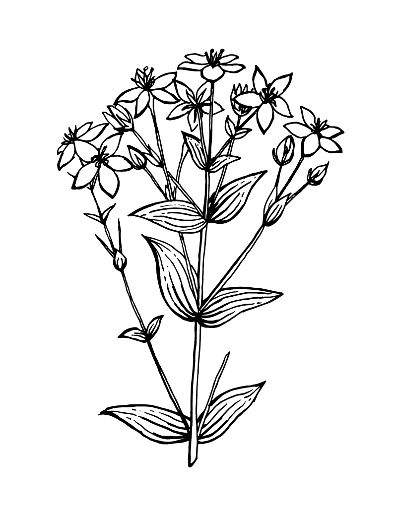 Wishcraft_Apothecary_Bach_Flower__Centaury.jpg