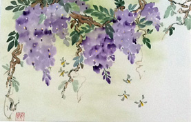Wisteria   15″x23″, watercolor & ink