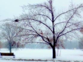 Winter Berries   Digital Photograph
