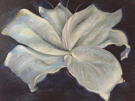"""Lily on Black Pastel, 20""""x25"""" unframed"""