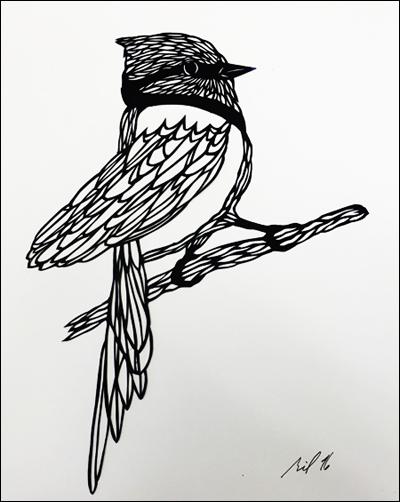 Cardinal   11″x9″, hand cut single sheet black paper mounted on white