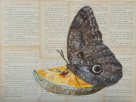 "Butterfly Melon Mixed media, 12""x16"""