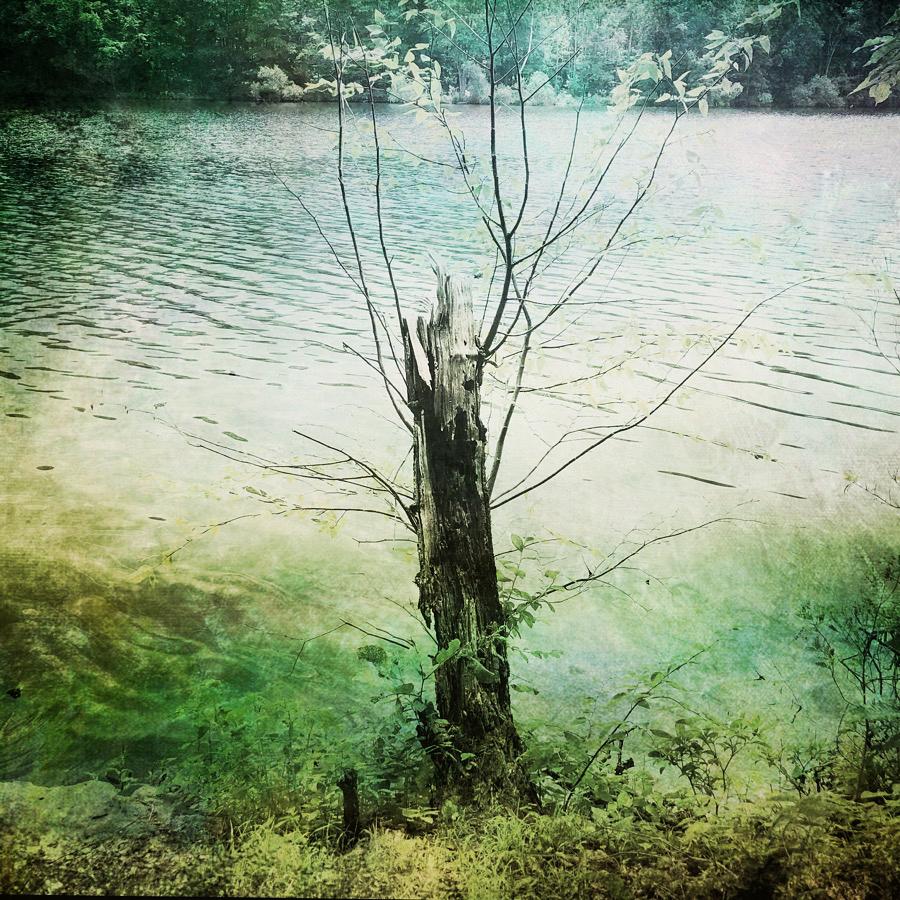 Borek-untitled-resevoir-tree-artsee.jpg