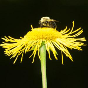 1_doyle_busy-bee.jpg