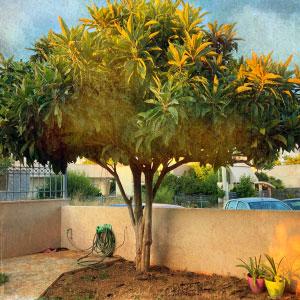 greek-tree-IMG_0032-borek-art-tour.jpg