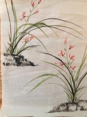 Grass Orchids