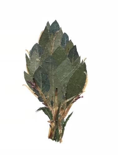 "Might Choke Arti Pressed botanical collage, 8""x10"""