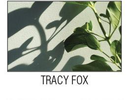06-fox.jpg