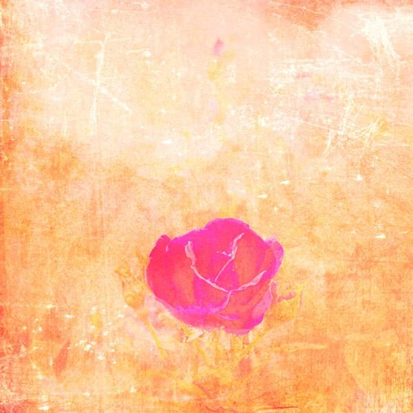 Borek-IMG_5250-rose-study-red-center-2.jpg