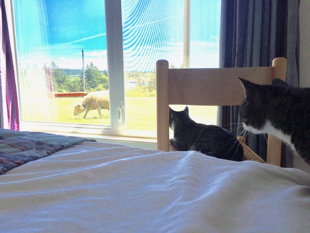 Last summer, two cats watching the action outside
