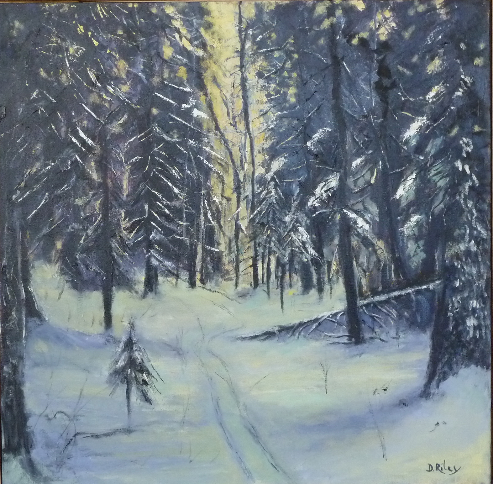 Into the woods 36x36 .JPG