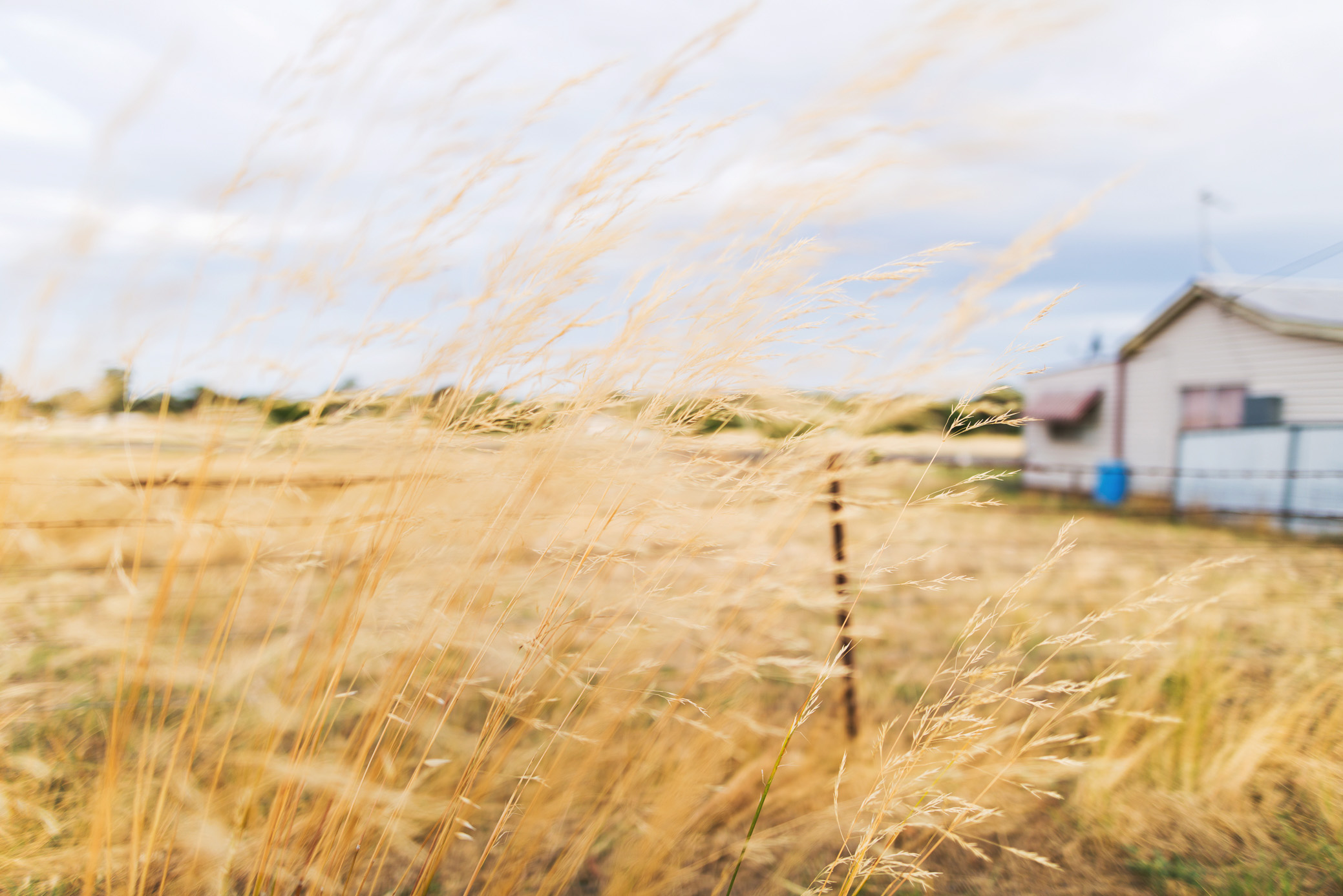 Summer grasses in Temora by Sydney Photographer, Cindy Cavanagh.