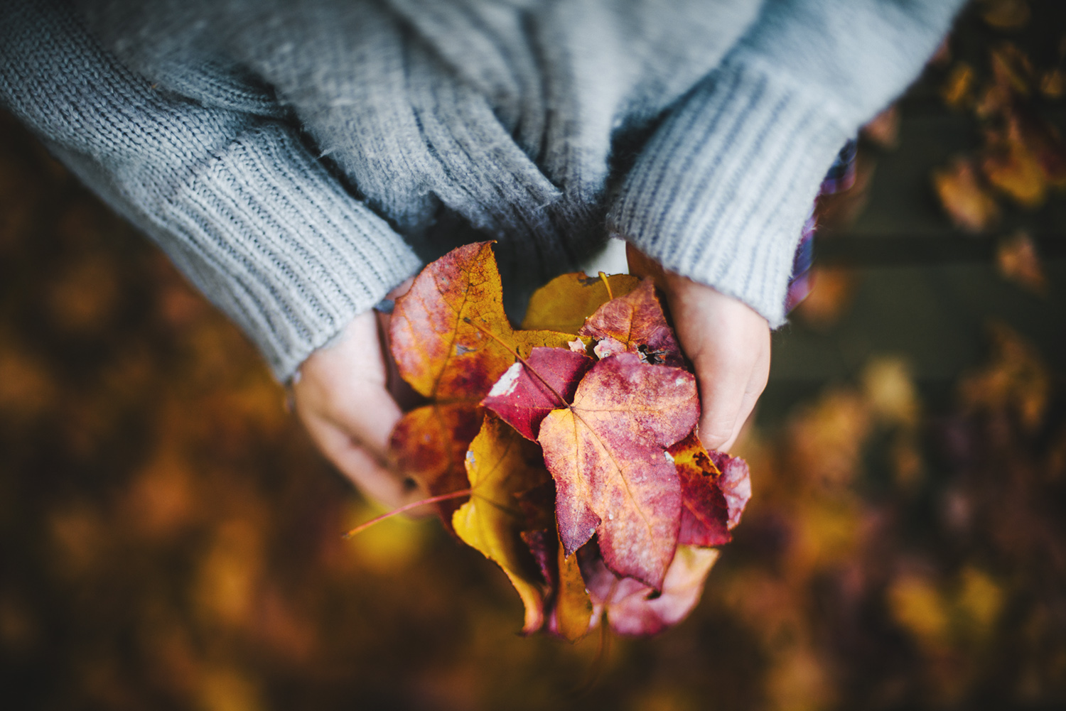 Autumn leaves in a girls hands captured in her front yard by Cindy Cavanagh