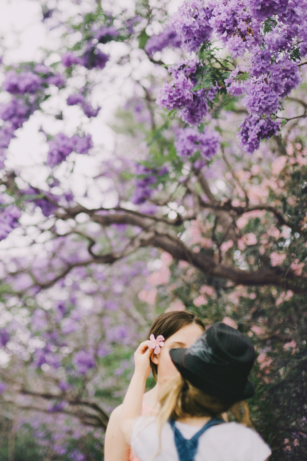 hills-district-lifestyle-photographer-jacarandra-tree