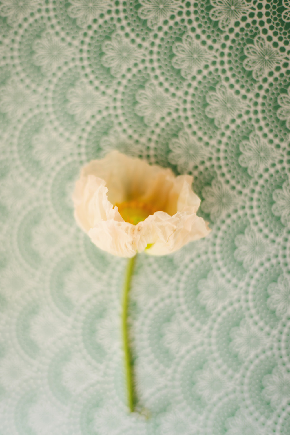 still-life-photography-sydney-flower-and paper