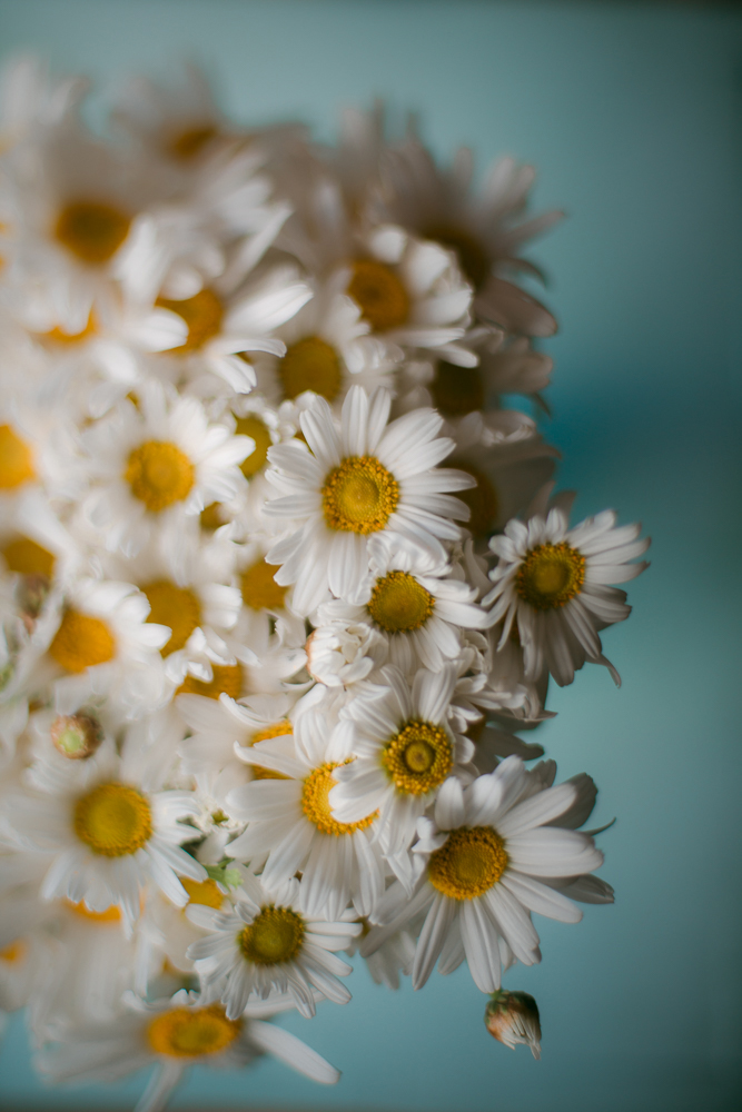australian-still-life-photographer-bunch-of-daisies
