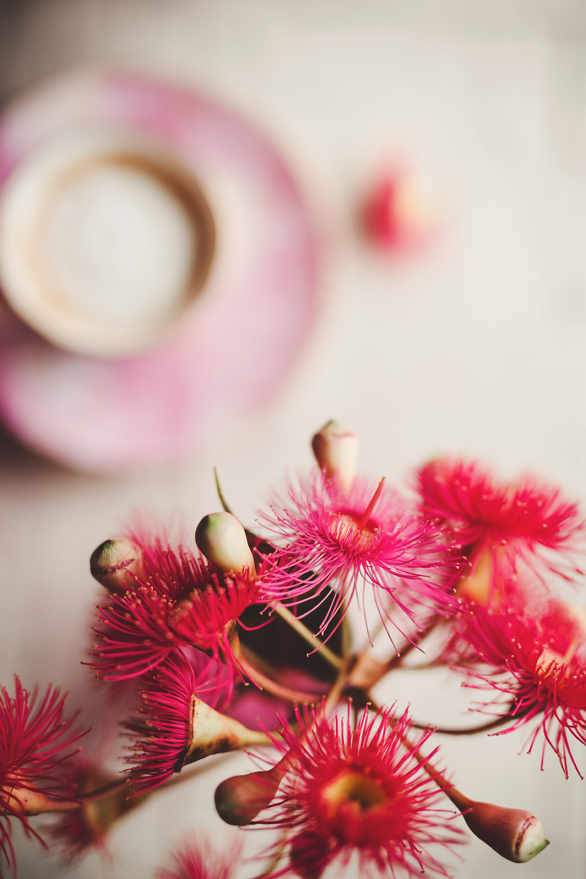 australian-lifestyle-photographer-gumnut-flowers