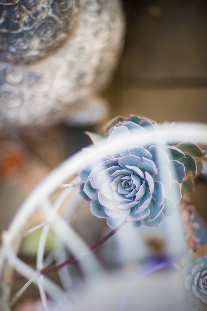 australian-lifestyle-photographer-succulents