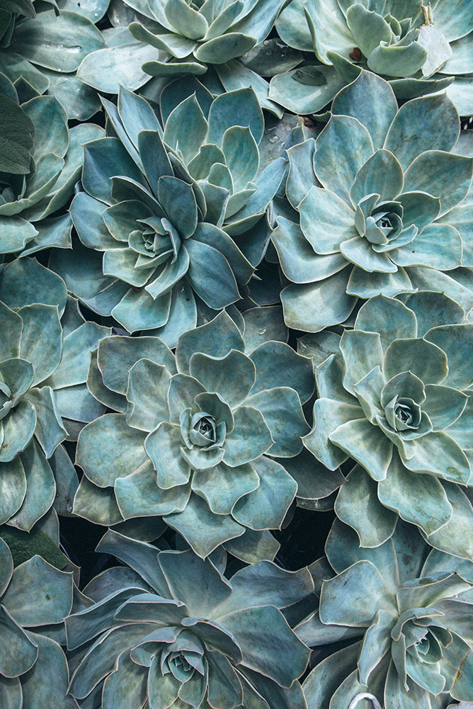 australian-photographer-succulents