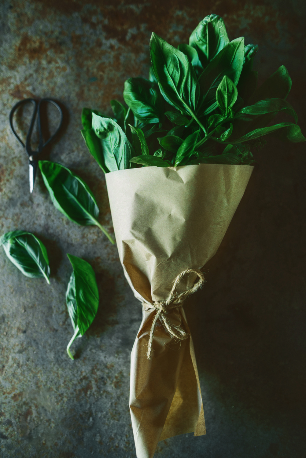 lifestyle-photography-sydney-bunch-of-basil
