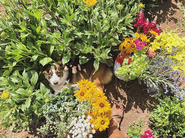 it's flower season, people!! and murph is not upset about it. 💐🌈💛