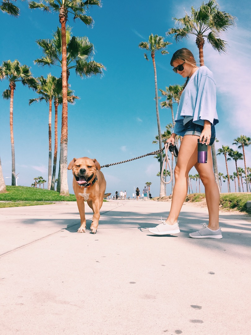 top-things-to-do-in-venice-beach