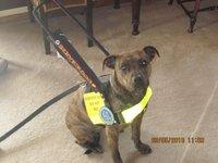 Assisstance dog, Molee