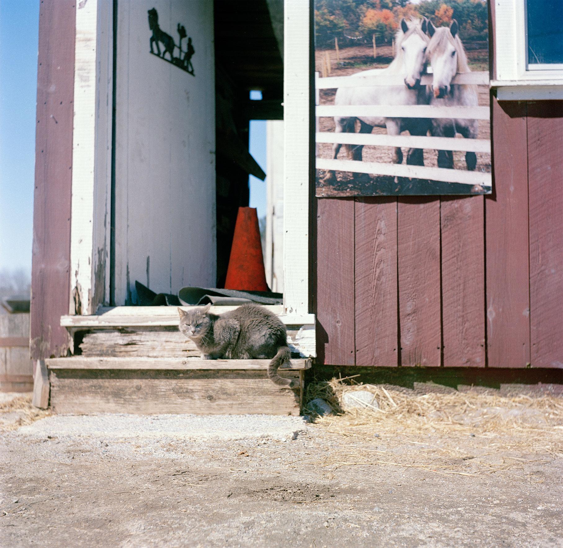 farmcat.jpg