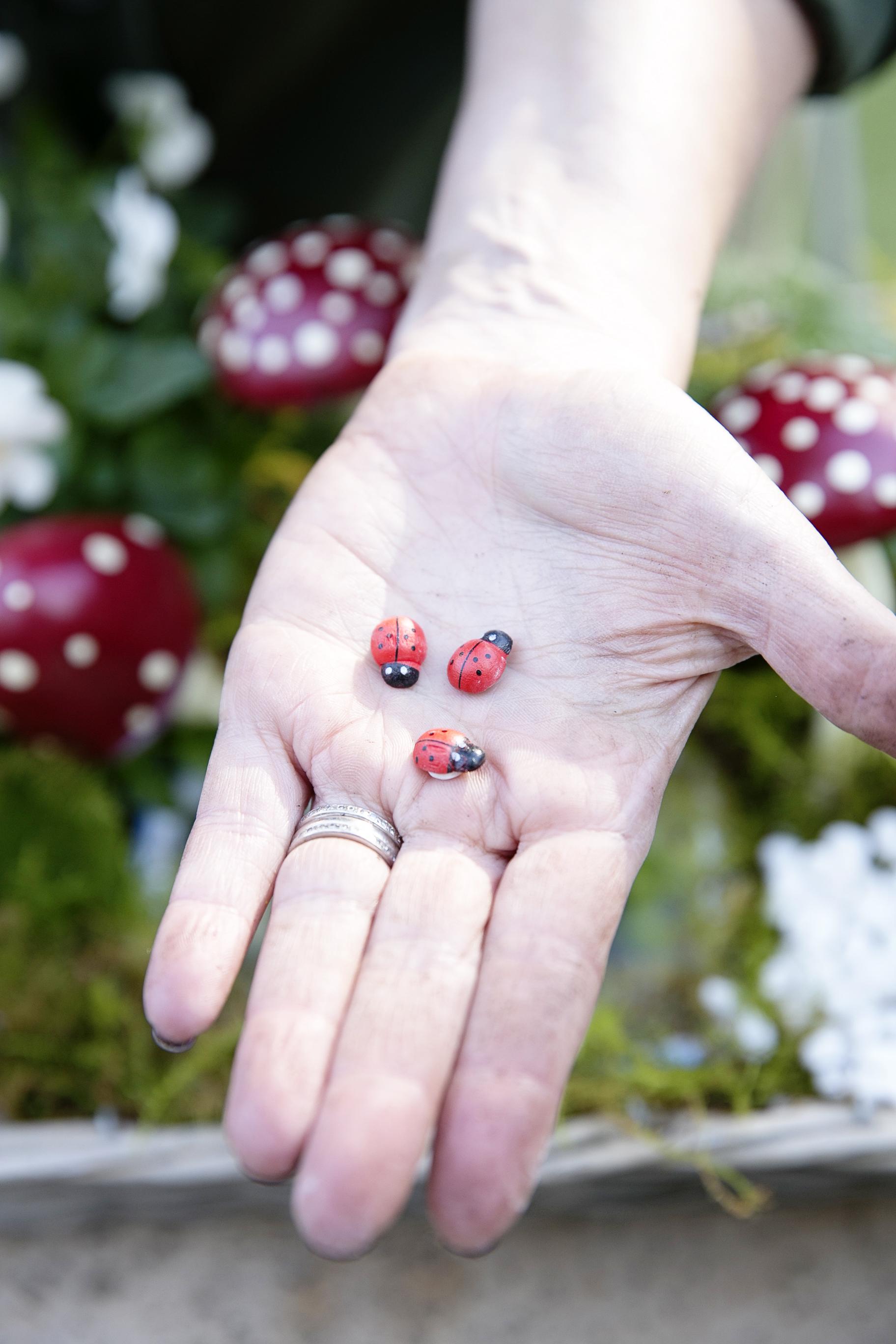 Fairy Garden 019.JPG