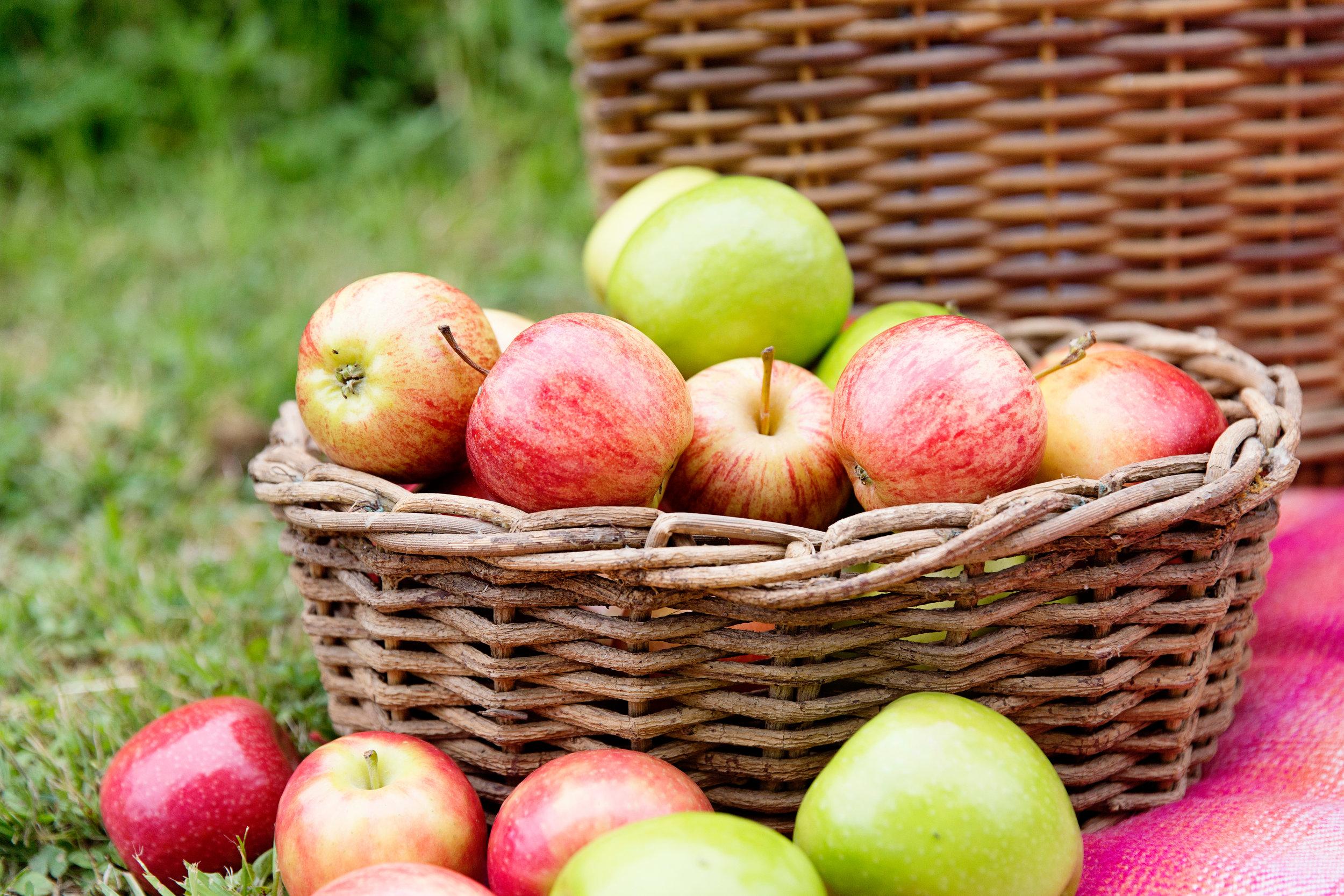 Apples 016-1.jpg