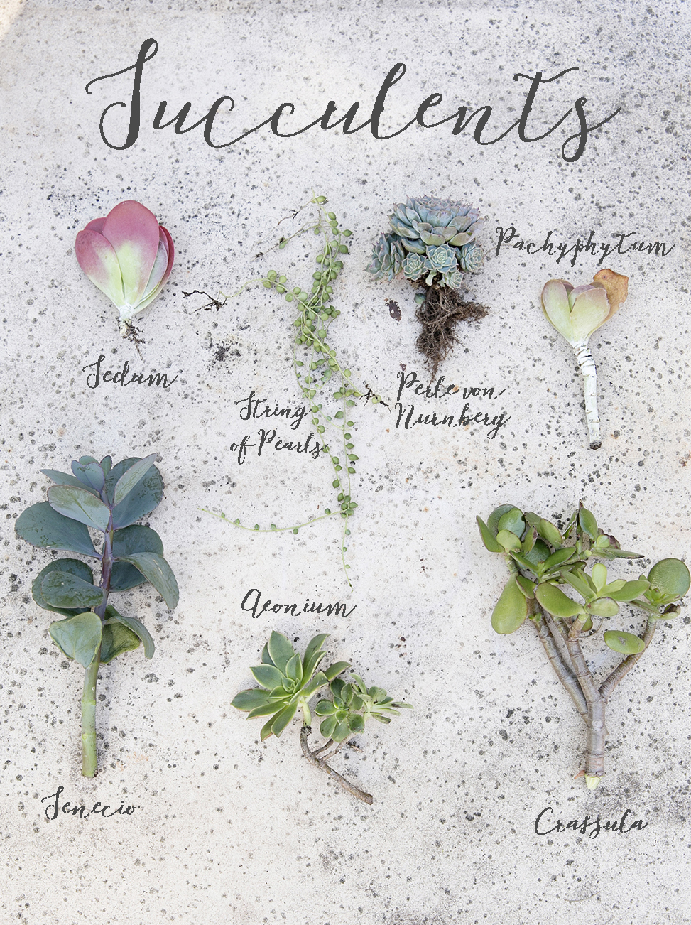 Succulents 001 names.jpg